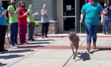 """Illustration : """"Le chien le plus ancien d'un refuge reçoit une ovation lorsqu'il part pour rejoindre sa nouvelle famille (vidéo)"""""""