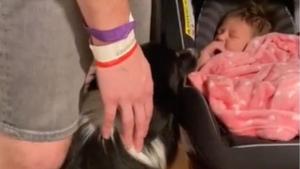 Illustration : Une future maman filme l'instant touchant où sa chienne exprime de la curiosité pour le bébé et sa joie de l'accueillir