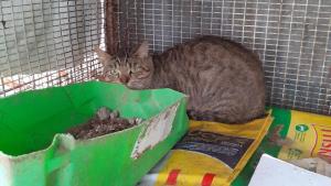 Illustration : La SPA met fin au calvaire de 9 chats enfermés dans des cages durant 7 ans. Une enquête est ouverte