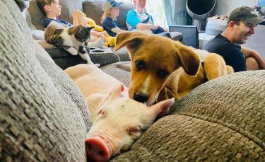 """Illustration : """"Un jeune chien souffrant de nombreux problèmes de santé devient le meilleur ami d'un cochon"""""""