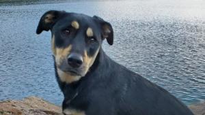 """Illustration : """"A la recherche d'un un chien perdu depuis 5 jours, des bénévoles parcourent plus de 22 km à travers les montagnes enneigées"""""""