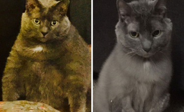"""Illustration : """"20 photos de chats et de chiens qui ont vaincu l'obésité grâce au soutien de leur famille"""""""