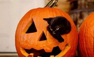 """Illustration : """"16 chats noirs prêts à fêter Halloween en famille"""""""