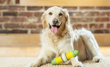 """Illustration : """"PetSafe lance une nouvelle gamme de produits pour le bien-être et l'épanouissement de nos compagnons à 4 pattes"""""""