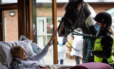 """Illustration : """"Grâce au personnel d'un hospice, une femme en phase terminale fait ses adieux à son cheval et ses 2 chiens depuis son lit"""""""