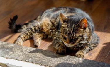 """Illustration : """"Une association fonde une maison de retraite pour accueillir des chats jusqu'à leur dernier souffle"""""""