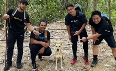 """Illustration : """"La vidéo d'un chien errant accompagnant un groupe de randonneurs devient virale"""""""
