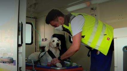 Illustration : En Suisse, les animaux de compagnie ont droit à leur ambulance en cas d'urgence médicale