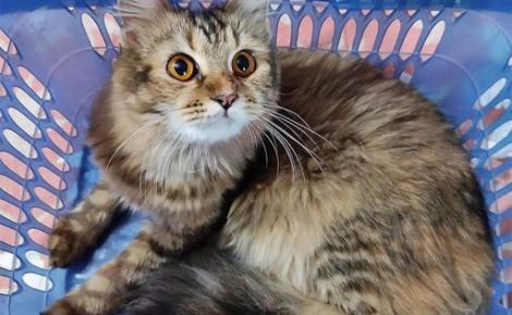Illustration : 14 photos de chats si confortablement installés dans un panier qu'on n'oserait les déranger pour rien au monde
