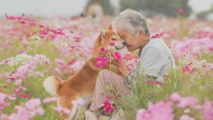"""Illustration : """"15 photos magnifiques et réconfortantes illustrant le lien fort entre une grand-mère et son Shiba Inu"""""""