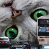 Illustration : 20 photos surréalistes de chats voyant la vie en grand