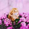 Illustration : 20 photos artistiques d'un chat roux devenu la muse de sa propriétaire