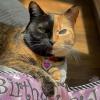 Illustration : Avec son minois bicolore et ses yeux hétérochromes, cette chatte est devenue une star sur Internet (vidéo)