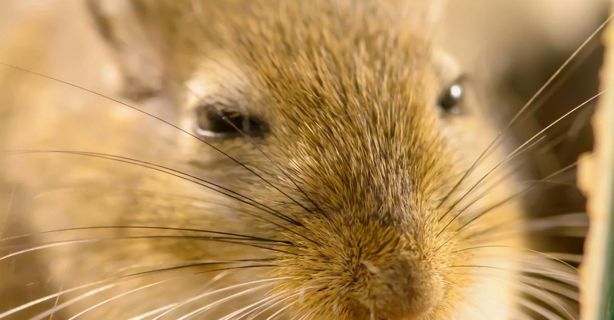 Grande cage équipée pour hamster ou souris avec bac en plastique et.