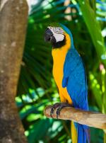 Photo : oiseau de race Ara bleu et jaune sur Woopets