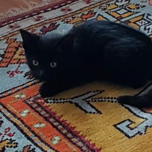 Photo de profil de Lalia Andasmas