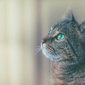 Avatar de monde-des-chats