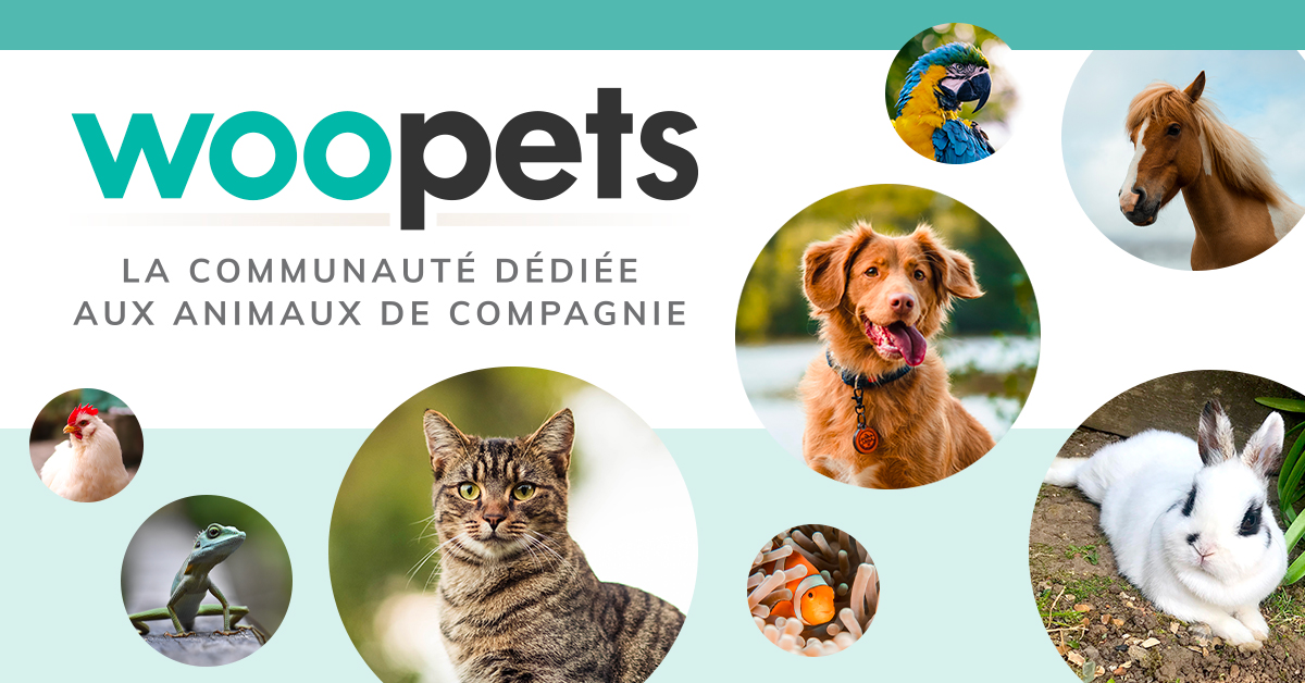 Actualités du monde animal - Woopets