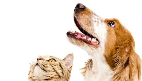 Tel maître, tel chien ou chat ? Les Français et leurs animaux de compagnie