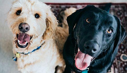 Enquête FLASHS-WOOPET – L'amour des Français envers leurs animaux de compagnie