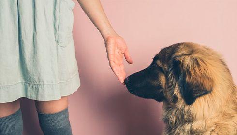 Un Français sur deux trouve davantage de réconfort auprès de son animal de compagnie que de son conjoint !