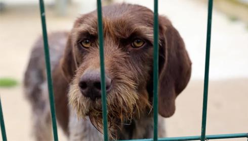 Sondage : les Français veulent adopter des animaux cet été