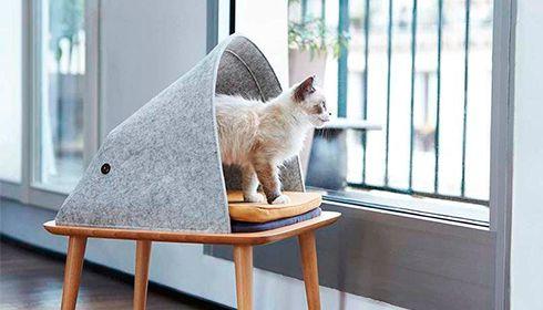 Les plus jolies créations pour chats !