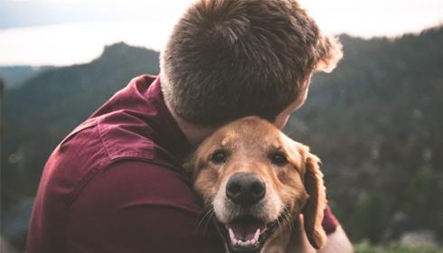 Les Français souhaitent adopter des animaux cet été