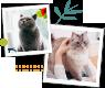 Adopter un chat : nos annonces et nos conseils